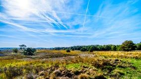 Biking através dos campos e das florestas da urze na reserva natural de Hoge Veluwe foto de stock royalty free