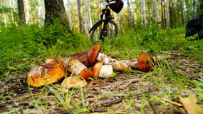 Biking. Bicycle touring for mushrooms in the forest Royalty Free Stock Images