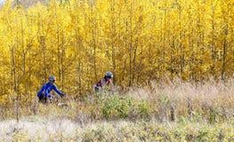 Biking della montagna delle coppie Fotografia Stock