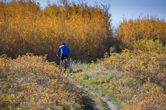 Biking della montagna di autunno Fotografia Stock