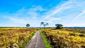 Biking door de de heidegebieden en bossen in het natuurreservaat van Hoge Veluwe stock foto