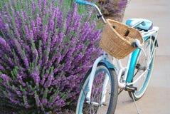 Biking door purpere wijze struik royalty-vrije stock fotografie