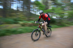 Biking in the forest Royalty Free Stock Photography