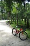 Biking in groen weelderig park royalty-vrije stock fotografie