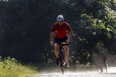 Biking na floresta com cão Imagem de Stock Royalty Free
