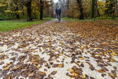Biking in the park. A young man biking in the park along a street covered by yellow and red leaves royalty free stock image
