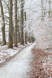 Biking path in frosted forest. Netherlands Royalty Free Stock Image