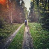 Biking in Poland Royalty Free Stock Photography