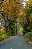 Biking road in autum. Two lane biking road through a forest with yellow fall leaves Stock Photo
