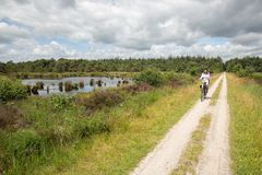 Biking woman in Dutch national park with forest and wetlands stock images
