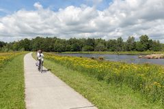 Biking woman in Dutch national park with forest and wetlands royalty free stock image
