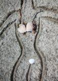 Bikini auf dem Strand lizenzfreie stockfotos