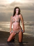Bikini de léopard Image libre de droits