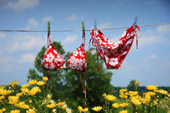 Bikini drying. With wild flowers underneath royalty free stock photo