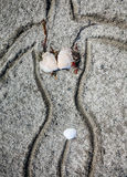 Bikini på stranden Royaltyfria Foton
