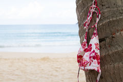 Bikini top hanging on a palm tree on tropical island Royalty Free Stock Photos