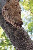 bikupa Arkivbild