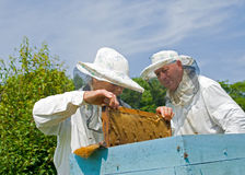 bikupa för 6 beekeepers Arkivbilder
