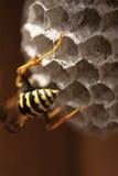 bikupa för 6 bi Arkivfoton