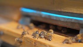 Bikupa för ultrarapidvideo en livsstilsvärm av biflugor in i en bikupa mot efterkrav pollenbjörnhonungen Biodlingbegrepp arkivfilmer
