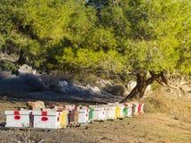 Bikupa i en röjning i träna av flera bihus israel Fotografering för Bildbyråer