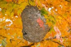 Bikupa i höst Royaltyfri Fotografi