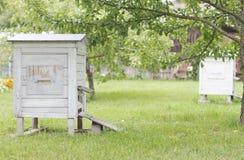 Bikupa i trädgården Arkivbild