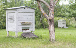 Bikupa i trädgården Arkivbilder