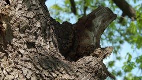 Bikupa i trädstammen - del 5 arkivfilmer