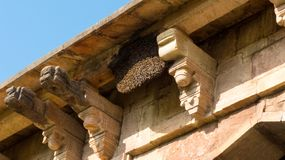 Bikupa på gamla Jama Masjid-Mandu, Indien Royaltyfria Bilder