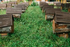 Bikupa som består av konstgjorda bikupor Uppställd efter andra bland de gröna ängarna arkivbilder