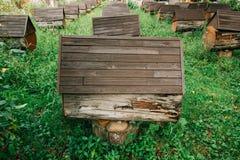 Bikupa som består av konstgjorda bikupor Uppställd efter andra bland de gröna ängarna royaltyfri foto