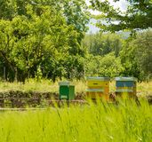 Bikupan av bin i den gröna Casentinoen i Tuscany Arkivfoto