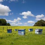 bikupar field pittoresk sommar Fotografering för Bildbyråer