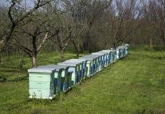 Bikupor Arkivfoton
