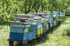 Bikupor i ängen Arkivfoto