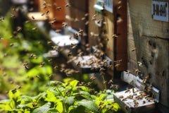 Bikupor i en bikupa med bin som flyger till landningen, stiger ombord i ett G Fotografering för Bildbyråer