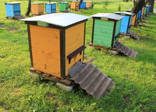 Bikupor i trädgården Royaltyfria Bilder