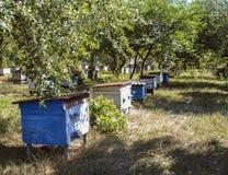 Bikupor med bin i bikupan i trädgården fotografering för bildbyråer