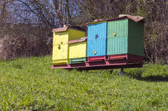 Bikupor på en äng Royaltyfri Foto