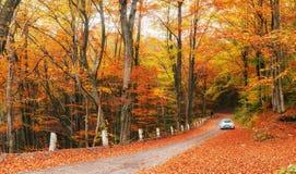 Bil på en skogbana Fotografering för Bildbyråer