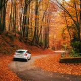 Bil på en skogbana Arkivfoton