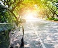 Bil på vägen under träd arkivfoton