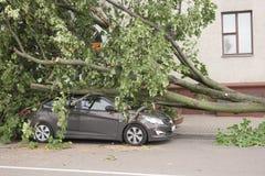 Bil som förstörs av ett stupat träd arkivfoton