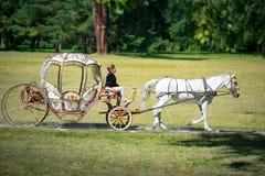 Bila Tserkva, Ucraina - 2 settembre 2017 il trasporto di A e un cavallo bianco che passa con un'estate parcheggiano fotografie stock libere da diritti