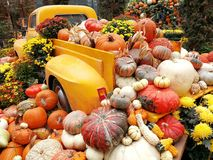 Bilar med pumpor vid halloween Arkivbild
