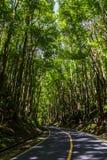 Bilar spowodowany przez człowieka las w Bohol fotografia stock
