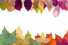Bilateraal frame van bonte de herfstbladeren Stock Afbeelding