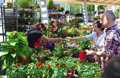 BILBAO, ESPAÑA, EL 31 DE MAYO DE 2015: Flores para la venta en Fotografía de archivo libre de regalías