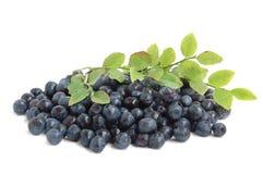 Bilberries Royalty Free Stock Photo
